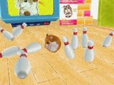 Adopt your very own family of hamsters! Care for them, teach them fun