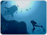 Unravel the secrets of the sea in your own underwater world